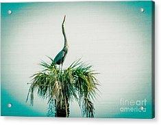 Stretching Heron Acrylic Print by Bob and Nancy Kendrick