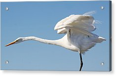 Stretching Out Acrylic Print by Paulette Thomas
