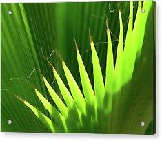 Stringy Palm Acrylic Print