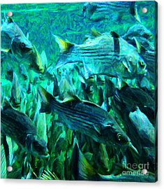 Striped Bass - Painterly V1 - Square Acrylic Print by Wingsdomain Art and Photography
