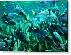 Striped Bass - Painterly V1 Acrylic Print by Wingsdomain Art and Photography