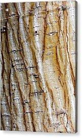 Striped Maple Acrylic Print by Steven Ralser