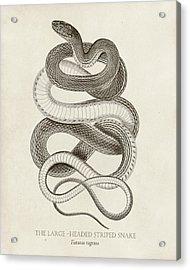 Striped Snake Acrylic Print