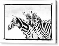 Striped Threesome Acrylic Print by Mike Gaudaur