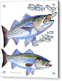 Stripers Acrylic Print by Carey Chen