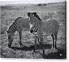Stripes Duo Acrylic Print