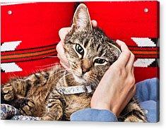 Stroking A Cat Acrylic Print by Tom Gowanlock