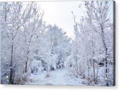 Stroll Through A Winter Wonderland Acrylic Print