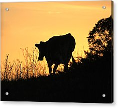 Acrylic Print featuring the photograph Strolling Into The Sunset by Penny Meyers