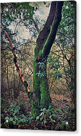Strong Enough To Hold You Acrylic Print by Laurie Search