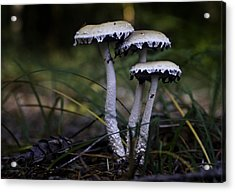 Acrylic Print featuring the photograph Stropharia Ambigua by Betty Depee