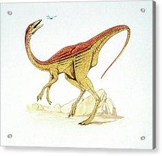 Struthiomimus Dinosaur Acrylic Print
