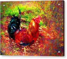 Strutting In Living Color Acrylic Print