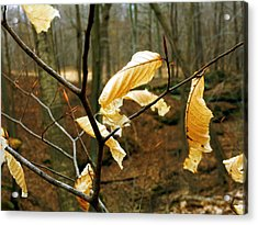 Acrylic Print featuring the photograph Stubborn Leaves by Jackie Carpenter