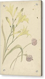 Studies Flower Of A Yellow Lily And A Blooming Onion Acrylic Print