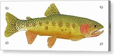 Acrylic Print featuring the painting Study Of A Rio Grande Cutthroat Trout by Thom Glace