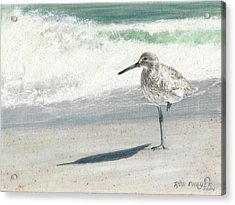 Study Of A Sandpiper Acrylic Print by Rob Dreyer