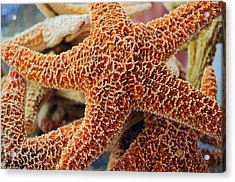 Study Of A Starfish Acrylic Print by Tikvah's Hope