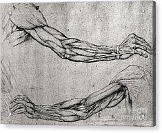 Study Of Arms Acrylic Print