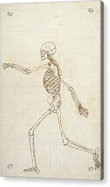Study Of The Human Figure, Lateral View, From A Comparative Anatomical Exposition Of The Structure Acrylic Print by George Stubbs