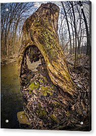 Stump Acrylic Print by Carl Engman