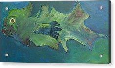 Stumpnose Acrylic Print