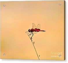 Stunning Saddlebags Acrylic Print by Al Powell Photography USA