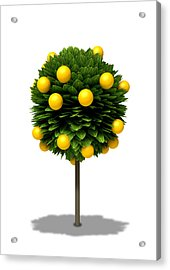 Stylized Orange Tree Acrylic Print