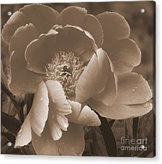 Subdued  Acrylic Print