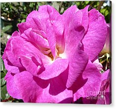 Sublime Tenderness  Acrylic Print by Anat Gerards