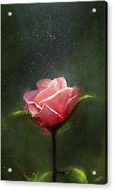 Subtle Beauty Acrylic Print