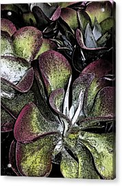 Succulent At Backbone Valley Nursery Acrylic Print by Greg Reed
