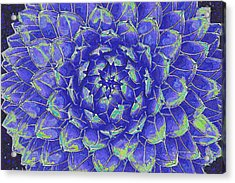 Acrylic Print featuring the digital art Succulent - Blue by Jane Schnetlage