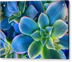 Succulent Blue On Green Acrylic Print by Sharon Beth