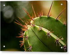 Succulent Defences Acrylic Print by Jacqui Collett