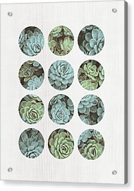 Succulent Dots Acrylic Print by Tammy Apple