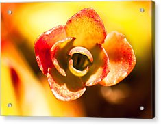 Succulent Eye Acrylic Print