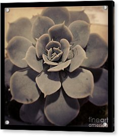 Succulent Acrylic Print by Heather L Wright