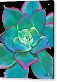 Acrylic Print featuring the painting Succulent Aeonium Kiwi by Laura Bell