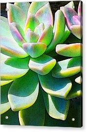 Succulent - Plant Art By Sharon Cummings Acrylic Print by Sharon Cummings