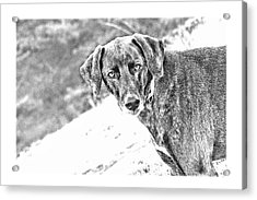 Such A Pretty Girl Acrylic Print by Peggy Collins