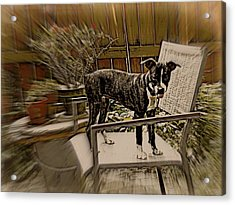 Sufferin Succotash Acrylic Print by Tg Devore