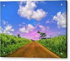 Sugar Cane Sunrise Acrylic Print