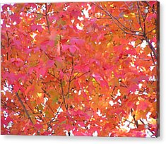 Sugar Maple Acrylic Print by John Wartman