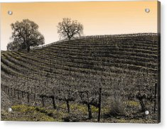 Suisun Valley Vinyards Acrylic Print
