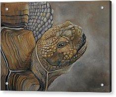 Sulcata Acrylic Print by Jean Cormier