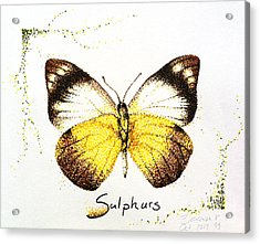 Sulphurs - Butterfly Acrylic Print by Katharina Filus