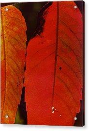 Sumac Leaves.jpg Acrylic Print