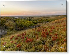 Sumac Acrylic Print by Scott Bean