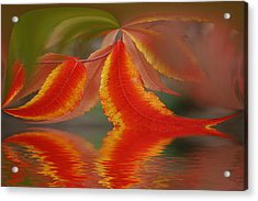 Sumach And Reflection Acrylic Print